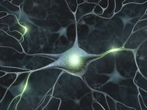 Free Neurons Royalty Free Stock Photography - 6847217