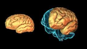 BRAIN-Left hemisphere 3D part