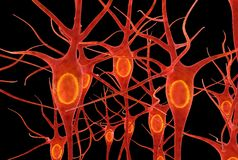 Neurons. Is an electrically excitable cell that processes and transmits information through electrical and chemical signals. These signals between  occur via royalty free illustration