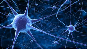 neurons för nerv för cellundersökning befläckte mikroskopiska monterade Fotografering för Bildbyråer