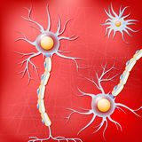 Neurons and glial cells in the brain on red background. Neurons and glial cells on red background. Brain neurons before Alzheimer`s disease, without amyloid stock illustration