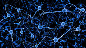 Neurons. In human brain, illustration 3D Royalty Free Stock Photos