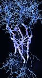 Neurons with myelin sheaths produced by oligodendrocytes stock photos
