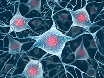 Neurons and Nucleus Royalty Free Stock Photo