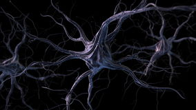 Neurons. Realistic brain neurons. 3d animation