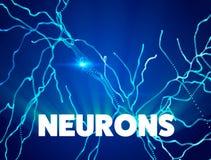 Neurons, synapses, neural network circuit of neurons, brain, degenerative diseases, Parkinson. Alzheimer Stock Image