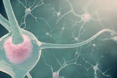 Neuronsna av nervsystemet med effektgöra suddig och ljus nervceller för illustration 3d Royaltyfri Fotografi