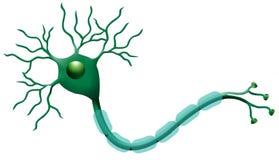 neurony Zdjęcia Royalty Free