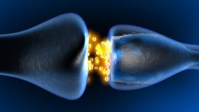 Neurotransmisión en la sinapsis ilustración del vector