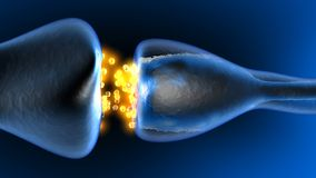 Neurotransmission in the Synapse Royalty Free Stock Images