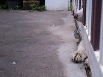 Neus en Benen van Siberisch Husky Outside royalty-vrije stock fotografie