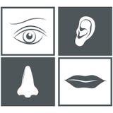 Neus, oog, mond en oorpictogrammen Stock Foto's