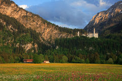 Neuschwanstein Castle. View of Neuschwanstein castle from flower covered valley Stock Images