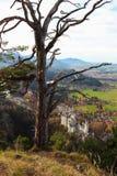 Neuschwanstein Castle in Germany Royalty Free Stock Image