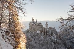 Neuschwanstein kasztel w zima krajobrazie Fotografia Stock