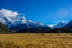 Neuseeland 67 Lizenzfreie Stockbilder