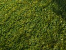Neuseeland-Ackerland-Gras bei Sonnenuntergang Stockfotografie