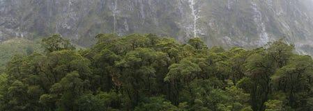 Neuseeland-Bäume Lizenzfreie Stockfotos