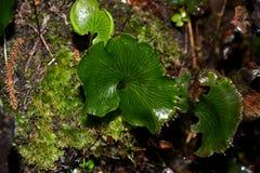 Neuseeland-einheimische Pflanzen stockfoto
