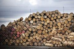 Neuseeland Forest Products Stockfotografie