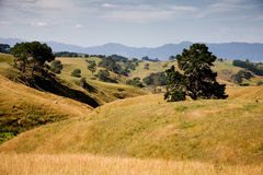 Neuseeland-Hügel Stockbild