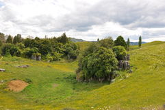 Neuseeland-hilside lizenzfreie stockfotografie