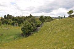 Neuseeland-hilside lizenzfreies stockfoto