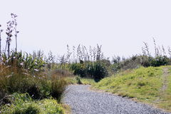 Neuseeland-Küstenbahn lizenzfreies stockfoto