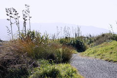 Neuseeland-Küstenbahn Lizenzfreie Stockfotografie