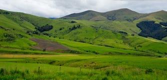 Neuseeland-Landschaft des grünen Feldes lizenzfreie stockfotografie