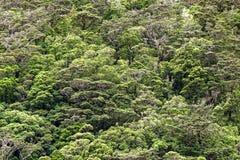 Neuseeland-S?dinsel - Regenwald bei Milford Sound stockfotografie