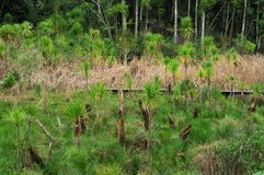 Neuseeland-Sumpfgebiete Lizenzfreies Stockfoto