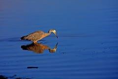 Neuseeland-Vogel Lizenzfreies Stockfoto