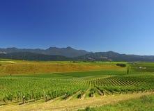 Neuseeland-Weinberg Stockfoto