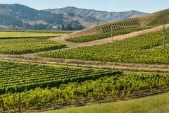 Neuseeland-Weinberge in der Sommerzeit Lizenzfreie Stockbilder
