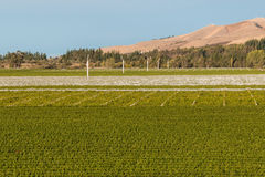 Neuseeland-Weinberge im Sommer Stockfoto