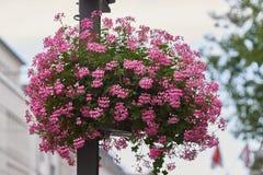 NEUSS, ALEMANIA - 8 DE AGOSTO DE 2016: Las flores agradables adornan los posts de la linterna en el centro de la ciudad Fotos de archivo libres de regalías