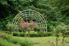 NEUSS, ALLEMAGNE - 8 AOÛT 2016 : Delect de roses dans Rosengarten public Images libres de droits