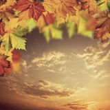 Neutral autumnal backgrounds with maple tree Stock Photo