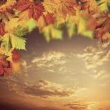 Neutrala höstliga bakgrunder med lönnträdet Arkivfoto