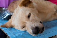 Neutralizar perros y gatos Foto de archivo libre de regalías