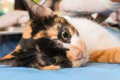 Neutralizar perros y gatos en día de la rabia del mundo imagen de archivo libre de regalías