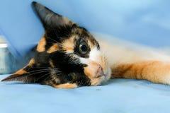 Neutralizar perros y gatos en día de la rabia del mundo foto de archivo