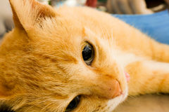 Neutralizar perros y gatos en día de la rabia del mundo foto de archivo libre de regalías