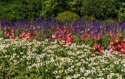 Neutralt landskap för grön dekorativ trädgård med härliga blommor royaltyfri foto