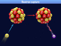 Neutron capture Stock Images