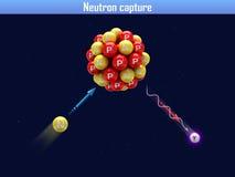 Neutron capture Royalty Free Stock Images