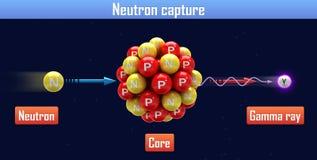 Neutrongefangennahme Stockfoto