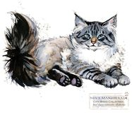 Neva Masquerade Cat. watercolor home pet illustration. Cats breeds series. Domestic animal vector illustration