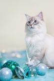 Neva Masquerade-Katze Stockfoto